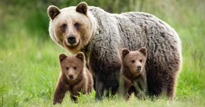 Sering Ada di Kartun, Kenalkan 8 Jenis Beruang di Dunia ke Anak Yuk