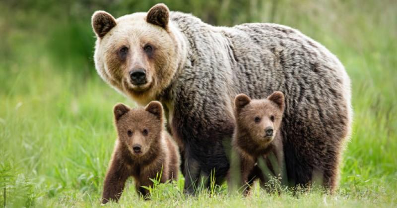 Sering Jadi Tokoh Kartun, Kenali 8 Jenis Beruang di Dunia | Popmama.com