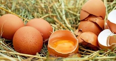 5 Manfaat Kuning Telur Kecantikan Kulit Wajah