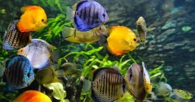 11 Jenis Tanaman Hias Aquascape Mempercantik Aquarium Rumah