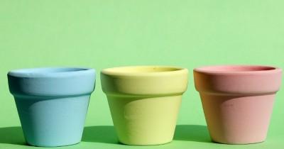 Kamu Harus Tahu 5 Cara Memilih Pot Tanaman Terbaik