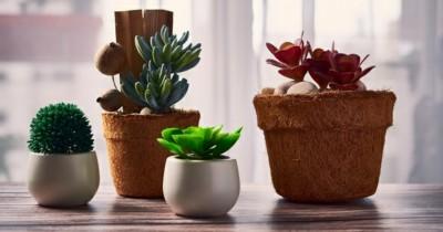 8 Inspirasi Pot Tanaman Mini Cocok Diletakkan Meja