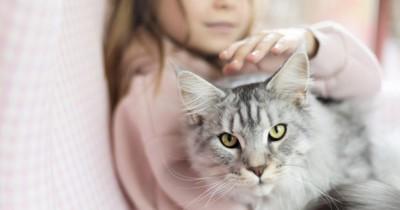 7 Pahala Keutamaan Merawat Kucing Perlu Diajarkan Anak