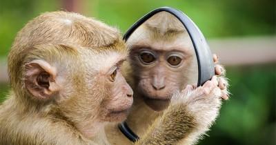 Ramalan Shio Monyet Tahun 2021, Harus Bisa Jaga Kesetiaan
