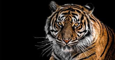 Ramalan Shio Macan Tahun 2021, Masih Memendam Trauma Masa Lalu