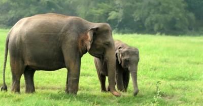 16 Fakta Menarik Tentang Gajah Perlu Anak Ketahui