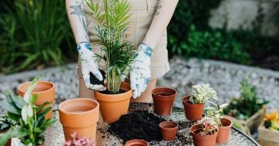 10 Tanaman Hias yang Tidak Mudah Mati dan Minim Perawatan