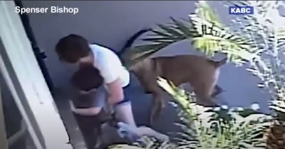 Video Viral, Seorang Mama Melawan 2 Anjing Menyerang Anaknya