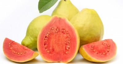 Kaya Vitamin, 7 Manfaat Jambu Biji Kesehatan Balita