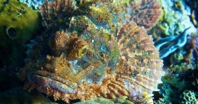 Tambah Pengetahuan Anak, Inilah Ikan Batu Paling Beracun Dunia
