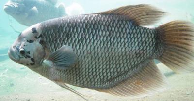 Enak Bergizi, 5 Resep MPASI dari Ikan Gurame Bayi 7 Bulan