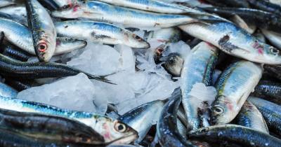 Untuk Kesehatan Jantung, Ketahui Manfaat Ikan Tenggiri Ibu Hamil