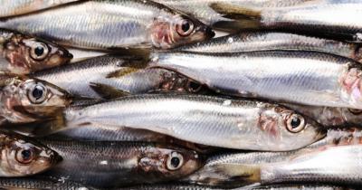 Ini Dia Manfaat Ikan Sarden Ibu Hamil, Mencegah Penyakit Jantung