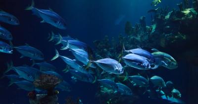 Bolehkah Ibu Hamil Makan Ikan Laut Ini Penjelasannya