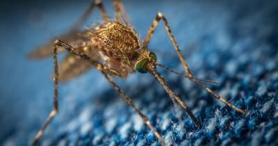Waspada Gigitan Nyamuk Ini Dapat Menghambat Tumbuh Kembang Bayi