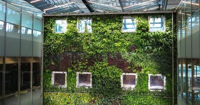 13 Rekomendasi Tanaman untuk Membuat Vertical Garden di Lahan Sempit