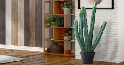 7 Jenis Kaktus Besar Cocok Jadi Dekorasi dalam Rumah