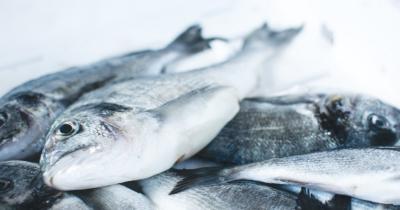 Sehat Bergizi, Ini 5 Resep MPASI dari Ikan Gabus