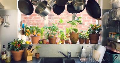 Bisa Tanam Bumbu Masak Sayuran, Begini Tips Berkebun Dapur