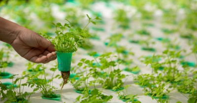 5 Metode Urban Farming Bisa Diterapkan Rumah Perkotaan