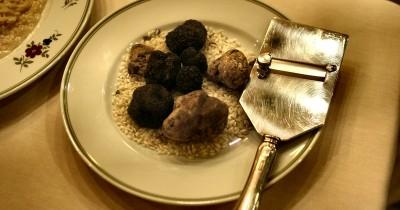 Fakta Unik Jamur Truffle Kerap Dianggap 'Berlian Dapur'