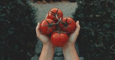 Kaya Vitamin A C, Inilah 5 Manfaat Tomat Program Kehamilan