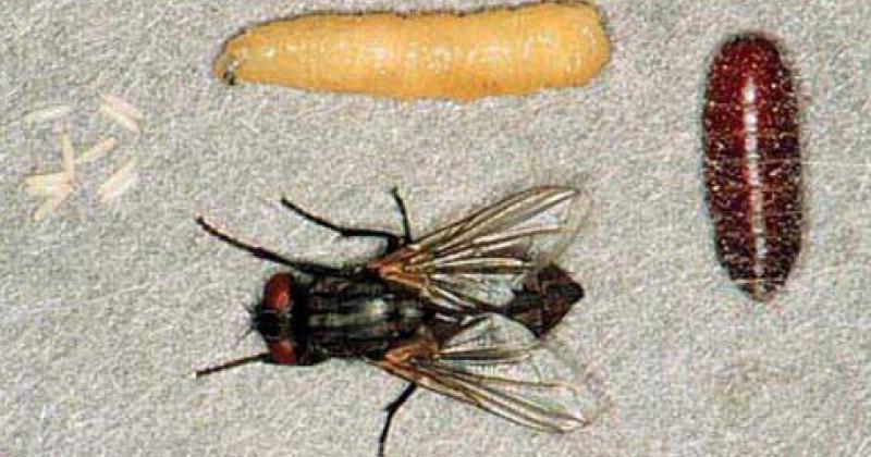 4 Proses Daur Hidup Lalat yang Perlu Anak Ketahui | Popmama.com