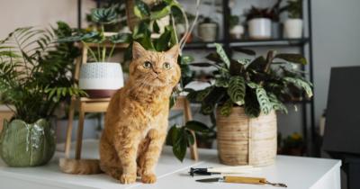 5 Tanaman Hias Tidak Beracun Aman Kucing