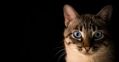 Bagian Tubuh Kucing Paling Suka Dielus, Kenalkan Anak Yuk