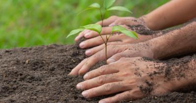Manfaat Menanam Pohon Bagi Lingkungan, Materi Tema 3 Kelas 4 SD