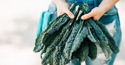 5 Manfaat Kale Kecantikan, Sayur Nutrisi Luar Biasa