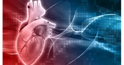 Ini 4 Organ Peredaran Darah Manusia Fungsinya