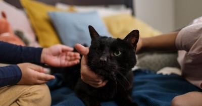 6 Fakta Unik Tentang Kucing, Dari Hobi Tidur Sampai Jadi Walikota