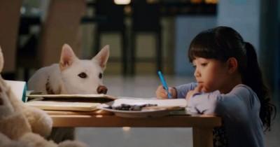 7 Film Persahabatan Manusia dan Hewan, Ceritanya Bikin Terharu