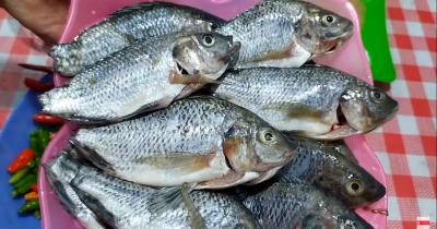 7 Resep MPASI dari Ikan Mujair untuk Bayi 7 Bulan, Coba Yuk Ma